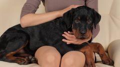 Как поставить собаке клизму