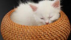 Как кормить котенка с пипетки