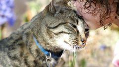Как научиться говорить по-кошачьи