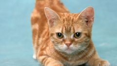 Как избавиться от запаха кошачьего туалета
