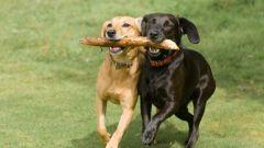 Как научить собаку приносить палку