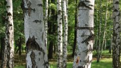 Как заработать деньги на лесе