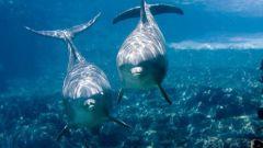 Как нарисовать дельфина в море