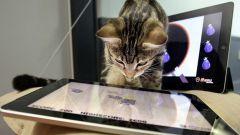 Как развлечь кошку