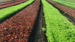 Как открыть свое дело в сельском хозяйстве