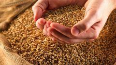 Как организовать крестьянско-фермерское хозяйство
