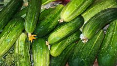 How to choose the seeds of cucumbers