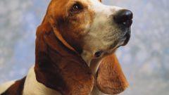Как лечить гастрит у собаки
