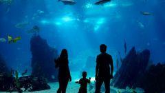 Что такое океанариум