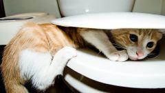 Как научить котенка ходить в унитаз