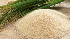 Как возделать рис