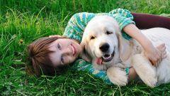 Как избавиться от аллергии на животных