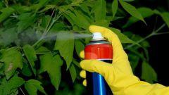 Как вылечить дерево