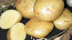 Как в квартире хранить картошку