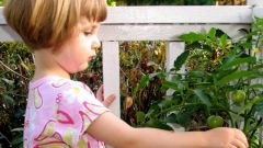 Как приучить ребенка к овощам