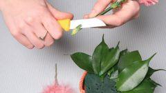 Как сделать флористический коллаж
