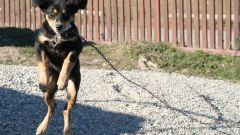 Как отучить собаку прыгать на хозяина