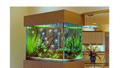 Как почистить фильтр в аквариуме