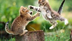 Как вылечить насморк котенку