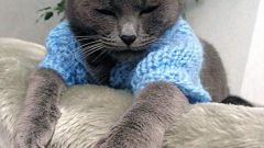How to knit a sweater the cat