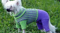 Как связать комбинезон для маленькой собаки