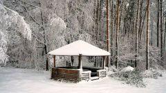 Как выглядит зимний лес