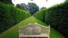 Как выбрать сад