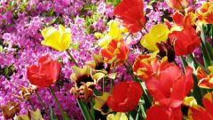 Как вырастить цветы в саду