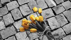 Как на черно-белой фотографии оставить цветную деталь