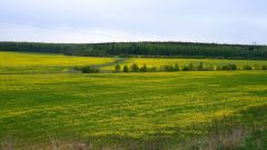 How to know the cadastral number of the land