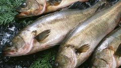 Как можно по цвету жабр определить свежесть рыбы