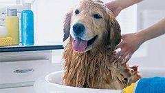 Как мыть лапы собаке
