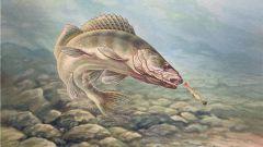 Как ловить рыбу на тюльку