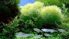 Как мыть аквариум для рыб