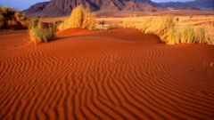 Как вести себя в пустыне