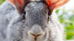 Как отличить мясо кролика