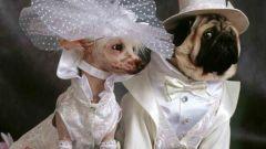 Как модно и практично одеть собаку