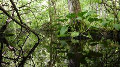 Как надо охранять болота