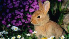 Как нарисовать кролика