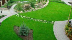 Как высаживать газон