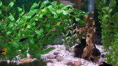 Как мыть грунт в аквариуме