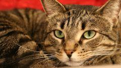 Как избавиться от глистов у котов