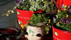How to get rid of mold in flower pots