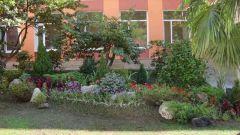 Как озеленить школу
