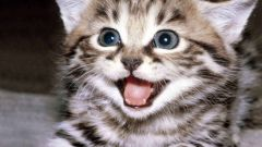 Как вывести кошачьих блох