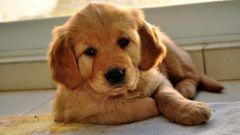Как нужно кормить щенка