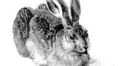 Как поэтапно рисовать зайца карандашом