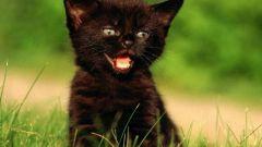 Как назвать черного котенка - мальчика