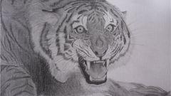 Тигр карандашом: как нарисовать красиво