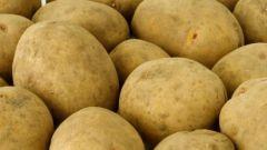 Как вырастить урожай картофеля